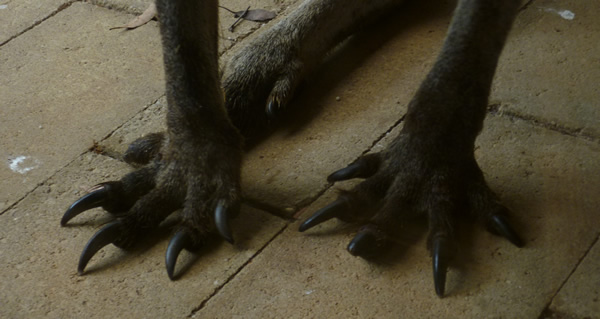 podsy feet