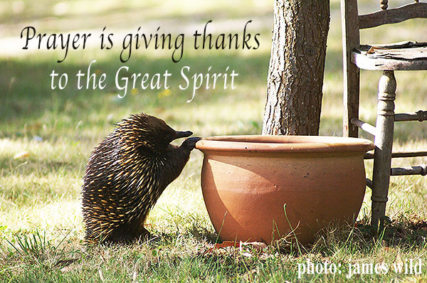 echidna-praying-great-spirit