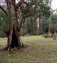 mystic-rise-sacred-tree