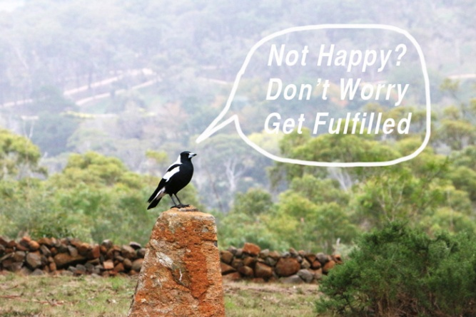 magpie-on-rock-text-700